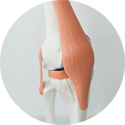 knee-injury-model-services